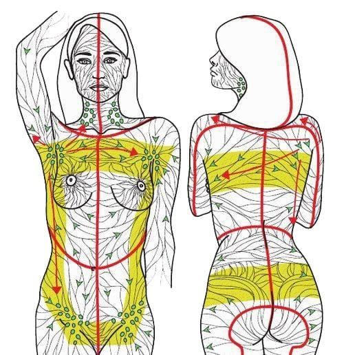 The Lymphatic Drainage Of The Thyroid Gland Is Extensive Manual Guide